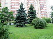 Квартира в Царском Селе м. Новые Черемушки - Фото 3