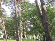 Живописный лесной земельный участок на 1-ой линии реки Ока, д. Лужки - Фото 4