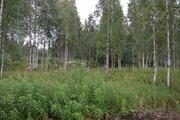 Земельный участок 40 соток ИЖС д. Колтуши - Фото 2