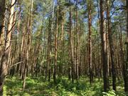 Лесной участок 20 соток д. Копнино ИЖС - Фото 4