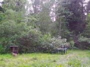 Лесной участок под ИЖС - Фото 4