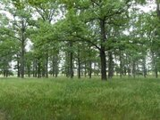 Продам участок возле леса Воронеж - Фото 2