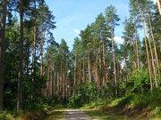 Участок 1 га, в сосновом лесу, Одинцовский район, 26 км от МКАД - Фото 1