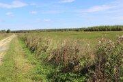 3,7 Га под сельхоз.производство - 95 км Щёлковское шоссе - Фото 5