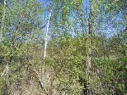 Уч. 10.2 сот. в Коккорево возле Ладоги - Фото 3