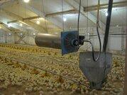 Продается Птицефабрика - производство мяса цыпленка бройлера - Фото 2