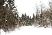 Дом в окружении леса СНТ Грачи-1 д. Вельево - Фото 4