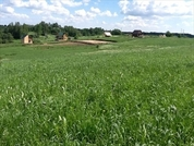 Красное Село - Талиннское шоссе , Кипень + 3 км - Фото 2