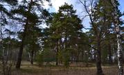 Лесной участок на высоком берегу р. Ока д. Лужки, Симферопольское шосс - Фото 5