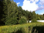 Участок 18 сот с соснами , в 5 км от г.Чехов, д.Б.Петровское. - Фото 2