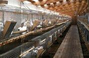 Кролиководческая ферма в западном Подмосковье - Фото 1