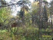 Участок с лесными деревьями в старо-дачном месте, крайний к лесу - Фото 3