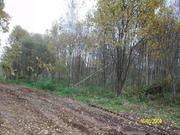 Эксклюзив! Продается участок 10 соток с лесными деревьями в д.Трясь. - Фото 4