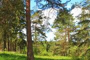 П.Горка лесной участок у леса на окраине деревни, свет, вода - Фото 2