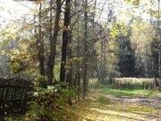 Участок с лесными деревьями в старо-дачном месте, крайний к лесу - Фото 2