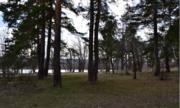 Лесной земельный участок на высоком берегу реки Ока деревня Лужки - Фото 3