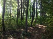 Участок с лесными деревьями 6 соток в с. Талеж - Фото 1