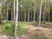 Лесной участок 15 соток в обжитом шикарном месте 5 км от г. Чехов - Фото 3