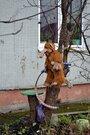 2 350 000 Руб., Купить квартиру в Московском районе Калининграда, Купить квартиру в Калининграде по недорогой цене, ID объекта - 323095869 - Фото 4