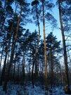 Участок 1 Га на 1 линии р. Волга с лесным массивом, г. Конаково - Фото 4