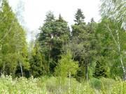 Лесной участок 5 гектаров в первозданной природе, река, лес, ИЖС - Фото 1