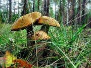 Лесной участок 15,37 сотки, ПМЖ, Новая Моква, 25 км. Калужское ш. - Фото 1