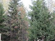 """Лесной участок 13 сот, поселок """"Зелёная роща-1"""", Минское ш, Сивково"""