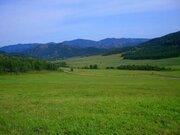 600 соток на Алтае - Фото 2