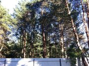 Участок 18 сот с соснами , в 5 км от г.Чехов, д.Б.Петровское. - Фото 1