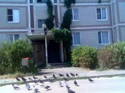 Предлагаю Вашему вниманию квартиру в Южном Подмосковье.