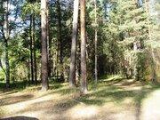Участок с вековыми соснами на р. Волга, д. Игуменка - Фото 1