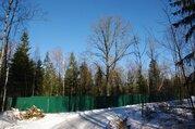 Лесной участок 25 соток в нии Радио - Фото 5