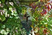 Дача в СНТ Энергетик у д. Александровка и ж/д ст. Зосимова Пустынь. - Фото 3