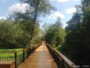 Земельный участок в Новолеоново поселок-парк - Фото 2