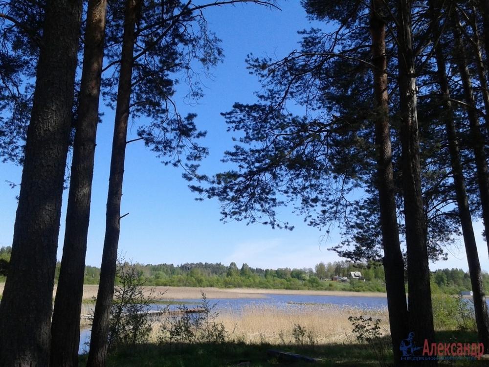 золотой насечкой, история возникновения поселка берёзово в лен области причиныЕсть противопоказания
