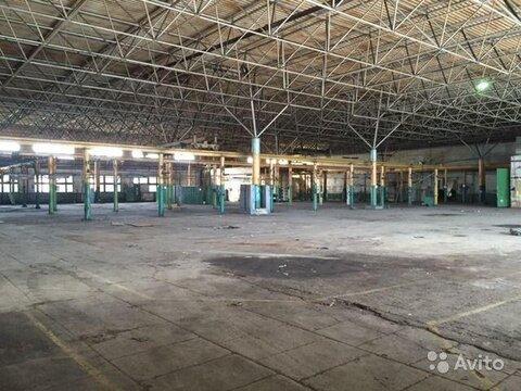 Сдам производственно-складские площади 7667 кв.м. - Фото 1