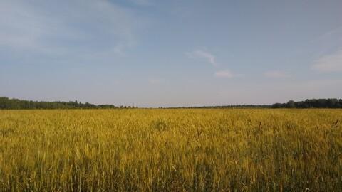Продается ровный, сухой земельный участок, площадью 71,4 га - Фото 1