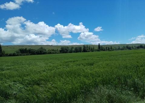 Продается участок в Республика Крым 5 га (500 соток) - Фото 3