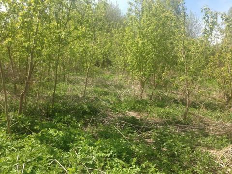 Продается Дача 70 м2 на земельном участке 30 соток в деревне Тарасково - Фото 3