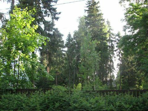 Участок 26,5 соток п. Правдинский. Ярославское ш. 25 км. от МКАД - Фото 1