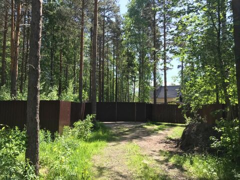 Участок в Васкелово 28 соток ИЖС (электричество, водопровод) - Фото 4
