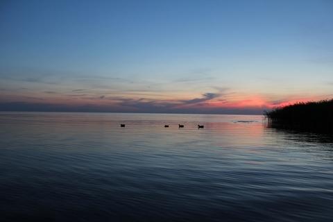 Участок на Чудском озере - Фото 5