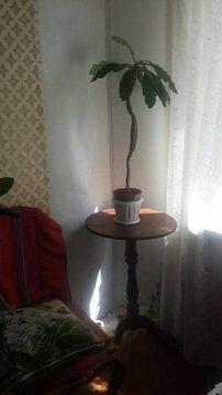 Продажа квартиры, Печоры, Печорский район, Ул. Индустриальная - Фото 2