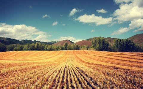 Земля сельхозназначения в селе Жигули Самарская область