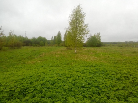 Судогодский р-он, Бараки д, земля на продажу - Фото 4