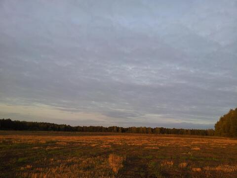 Продажа поляны в лесу 10 га на берегу озера - Фото 3