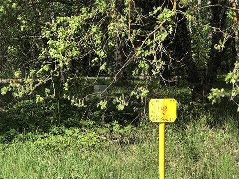 Участок 25 сот. ИЖС в дер. Липки, Ильинское ш, 30 км. от МКАД. - Фото 5