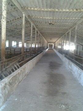 Ферма в Краснодаре - Фото 2