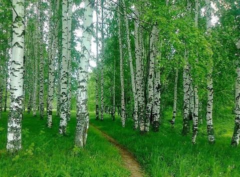 Продам 10 гектаров земли, дачное х-во, за 500 тысяч рублей - Фото 3