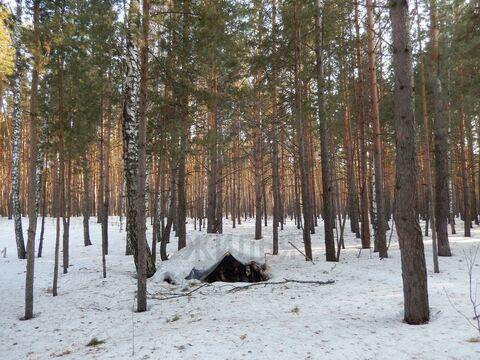 Продажа участка, Кудряшовский, Новосибирский район, Брусничная - Фото 5